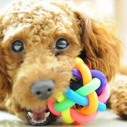 01e2efcc40ea Λαστιχένιο παιχνίδι - μπάλα σκύλου και γάτας με κουδουνάκι - OEM Pet Toy  Ball